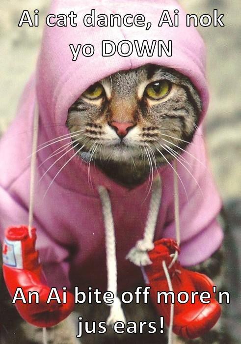 Cats cute boxing - 8235889664