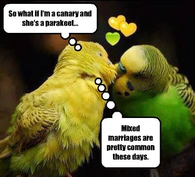 cute birds love - 8235961600