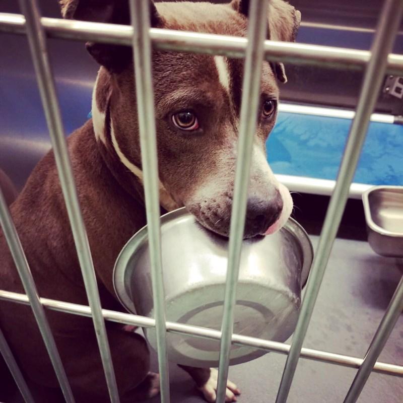 adopt adopted animal shelter bowl - 8236293