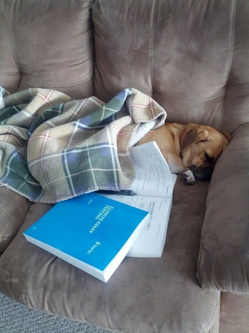 cute,studying,school,puppes