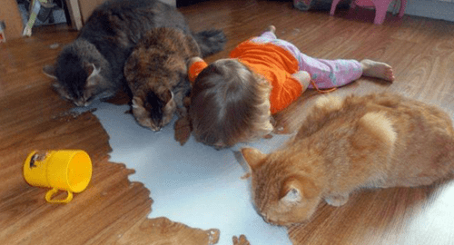 Cats,kids,milk