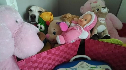 E.T,dogs,hidden