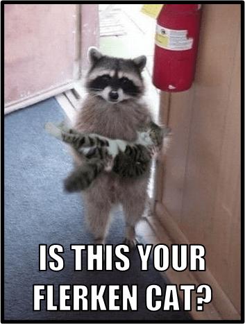 Cats rocket raccoon - 8236694528