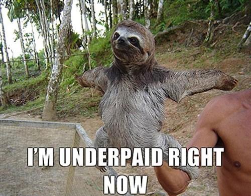 economy,sloths