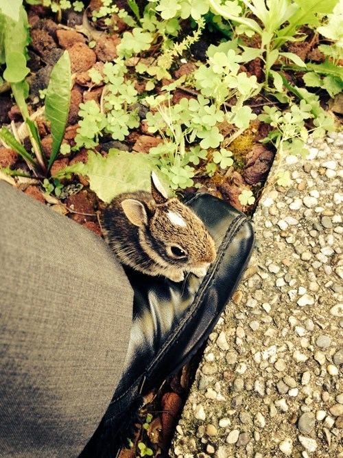 bunnies,cute,shoes