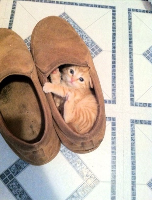 shoes kitten cute slippers