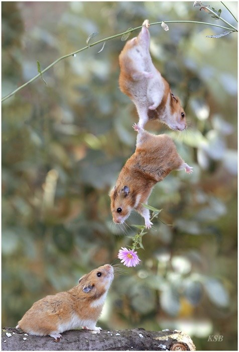 friends,hamster,wingman,love