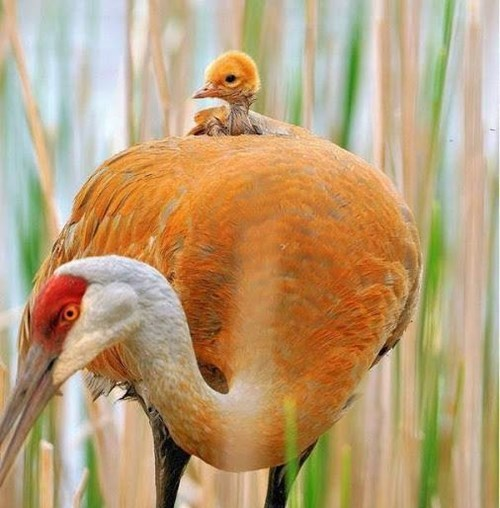 Babies birds chicks squee - 8237875456