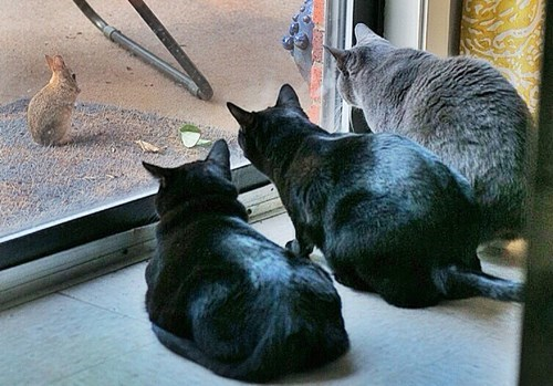 Cats,rabbits,waiting
