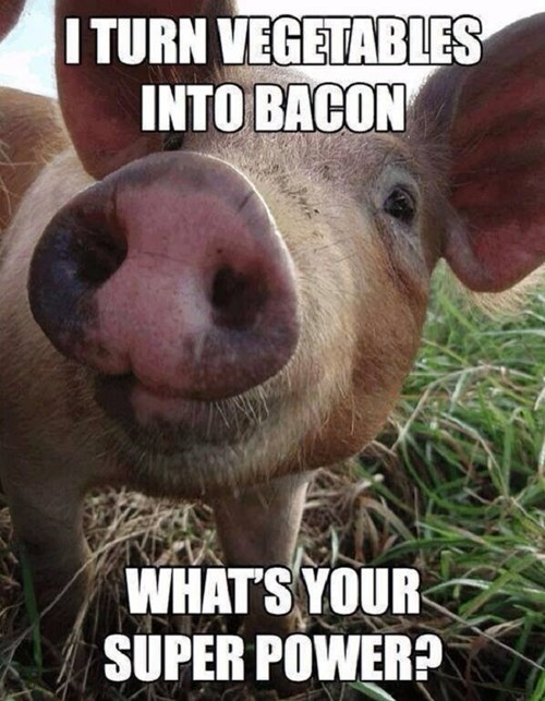 bacon,pig,super powers