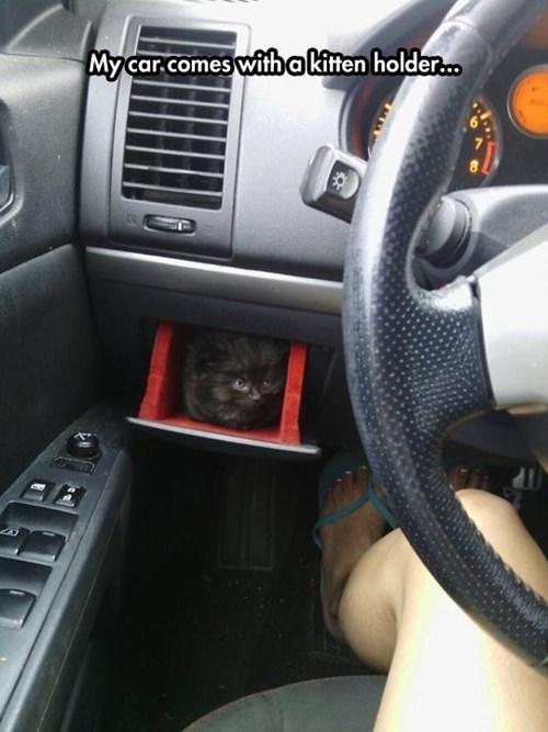 cars Cats kitten - 8237915904