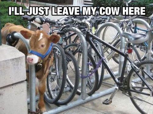 bikes cows weird - 8237917696