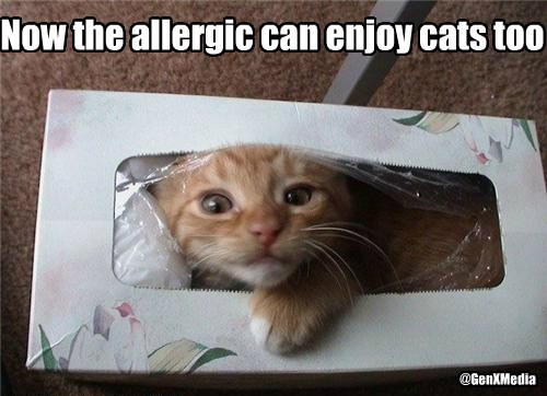 @GenXMedia Now the allergic can enjoy cats too