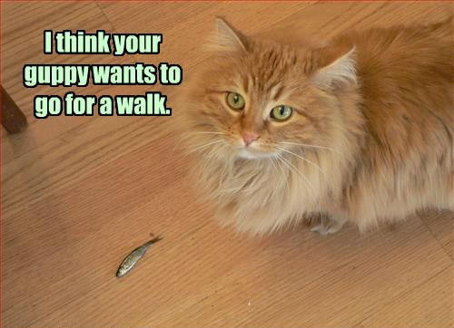 Cats walk guppies