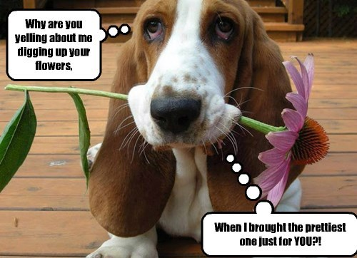 Why are you yelling about me digging up your flowers, When I brought the prettiest one just for YOU?! Cleverness Here