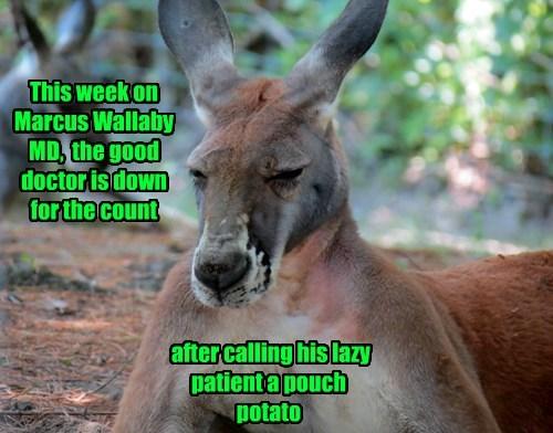 puns kangaroos - 8238312192