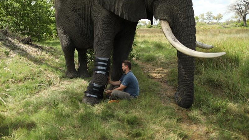 hero dogs prosthetics orthotist elephants amazing animals derrick campana - 8238341
