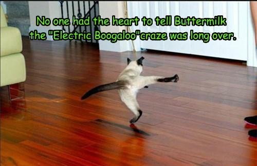 dancing cute Cats - 8239438336