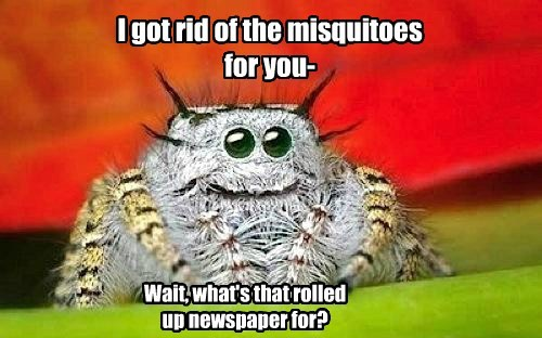 spiders - 8239558144
