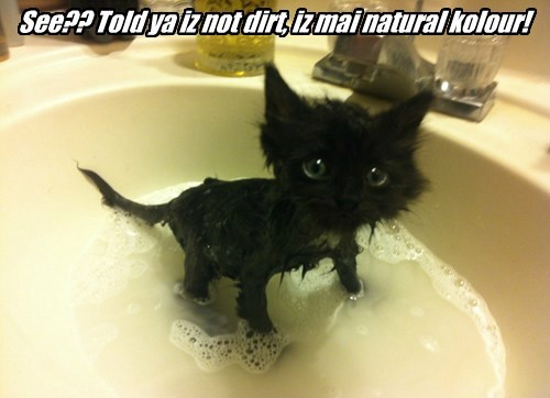 black cats baths cute Cats - 8239731968