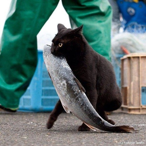 Cats,fishing