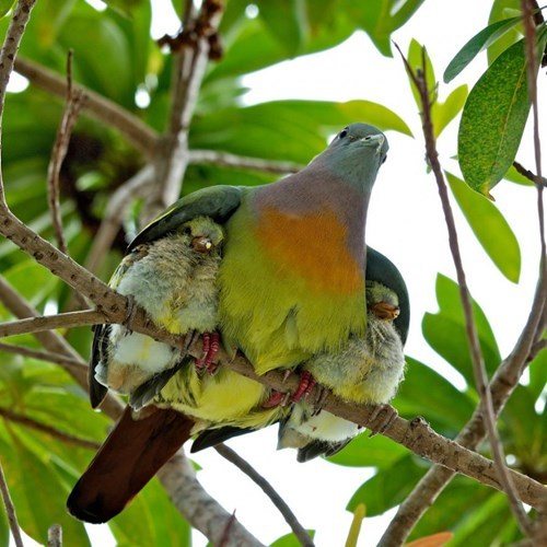 cute,birds,dad