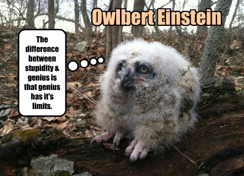 birds einstein funny owls - 8239952640