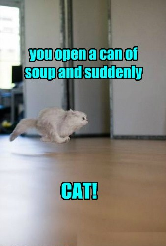 you open a can of soup and suddenly CAT!