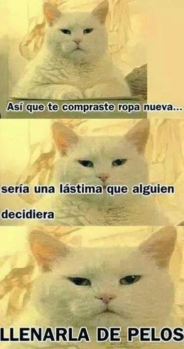 gatos bromas Memes animales - 8240330240