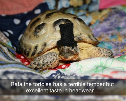 tortoise poorly dressed top hat - 8240478464