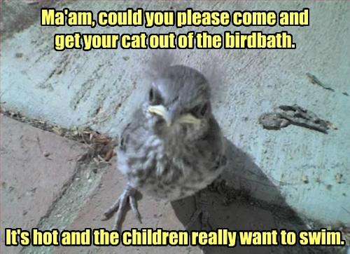 Cats birds deep end manners - 8240500992