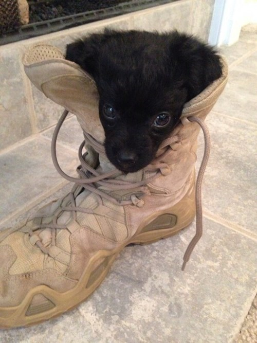 cute puppies military - 8240533760