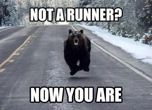 bears funny running - 8240546304