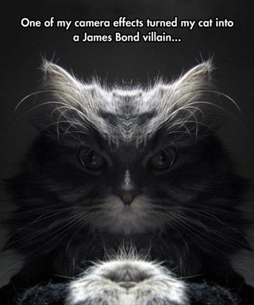I Expect You to Feed Me, Mr. Bond