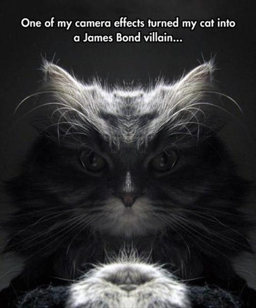 Cats villains - 8240584448