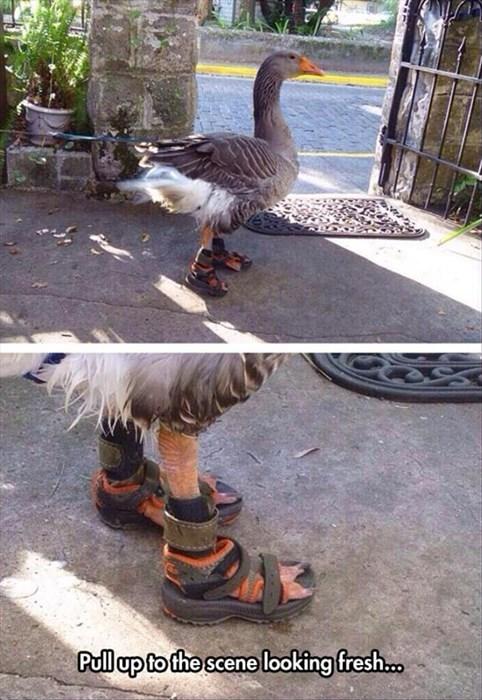 funny,geese,weird