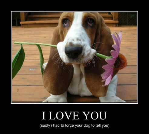 flowers dogs funny love - 8240632064