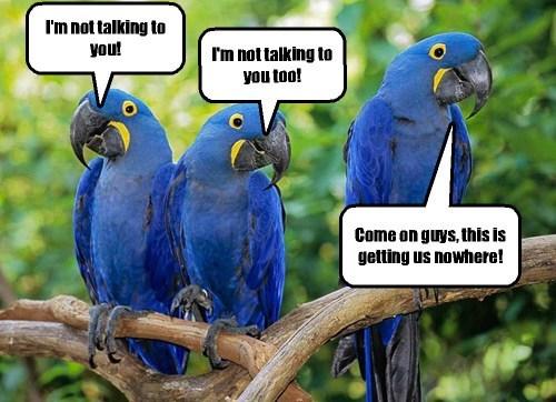 fighting parrotsm couples - 8240890368