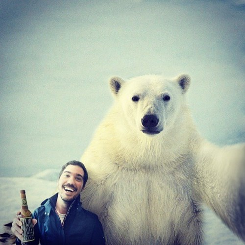 beer,wtf,polar bear,funny