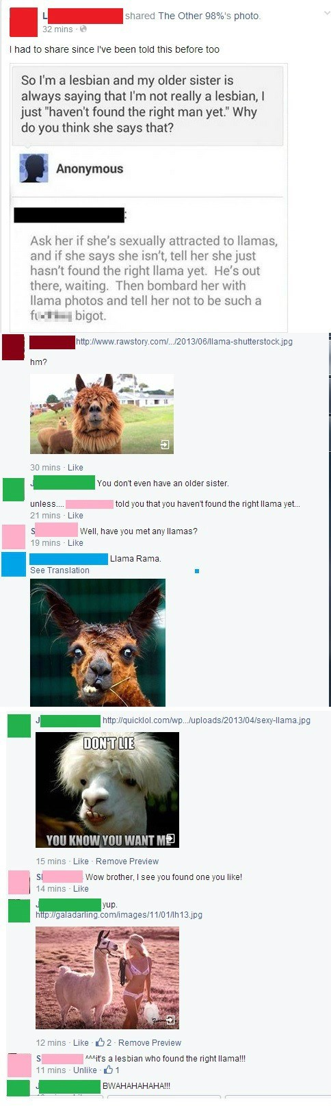 llama lgbtq comments failbook - 8241174016