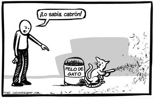 gatos bromas viñetas animales - 8241224192