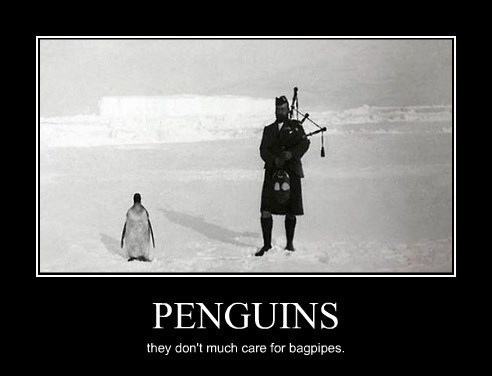 wtf,bagpipes,penguin,funny