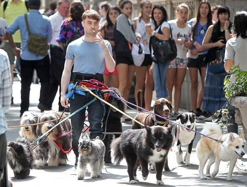 dogs Daniel Radcliffe funny celeb - 8241288704