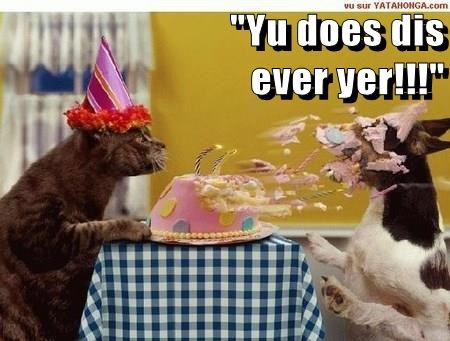 Cats,dogs,birthdays,funny