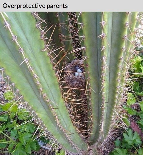 cactus nest parenting overprotective - 8241383168
