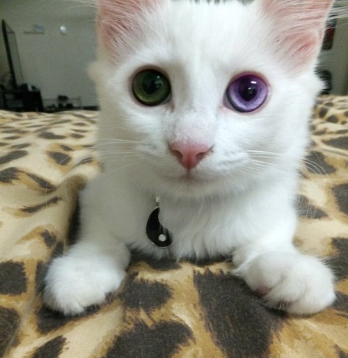 Cats cute eyes - 8241530624