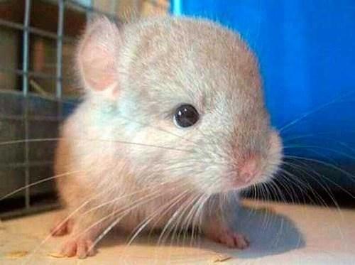 Babies cute mice - 8241552128