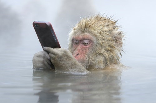 facebook,photography,phone,monkey