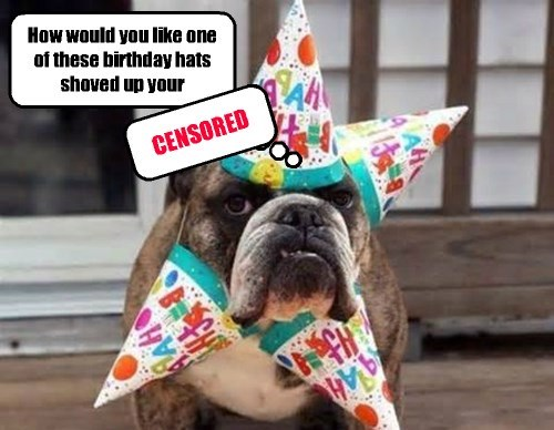 birthday dogs funny - 8241802240