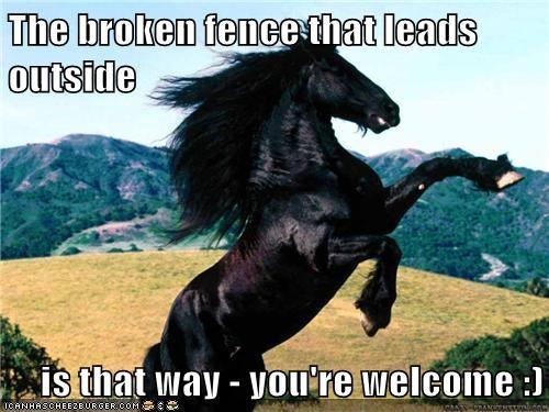 funny horses - 8241816064